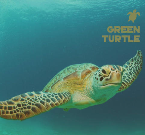 Green Turtle epoxy bio-resin system